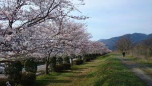 ケサカ桜公園