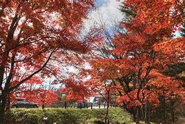 草津温泉道の駅 運動茶屋公園