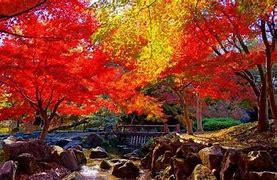 昭和の森(三郡山)