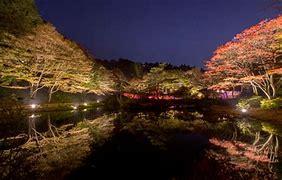 六甲高山植物園 紅葉 ライトアップ