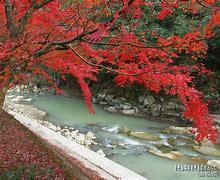 青井岳公園