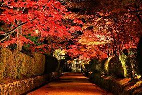 高野山 紅葉 ライトアップ